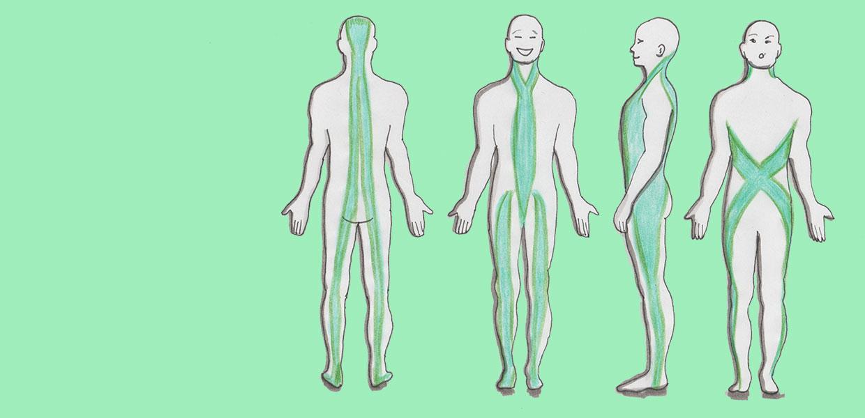 Illustration der Faszienzugbahnen