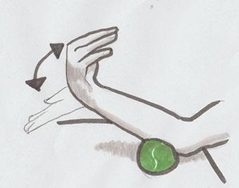 Gezeichnete Anleiung zur faszialen Selbstmassage des Unterarms mittels der Technik Gelenkbewegung